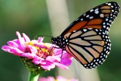 Hammock Park Butterfly