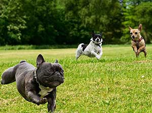 pinellas county dog parks